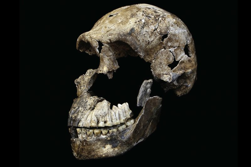 Varhaisia ja kehittyneitä ihmisen piirteitä yhdistelevä 300 000 vuotta sitten elänyt Homo naledi ...